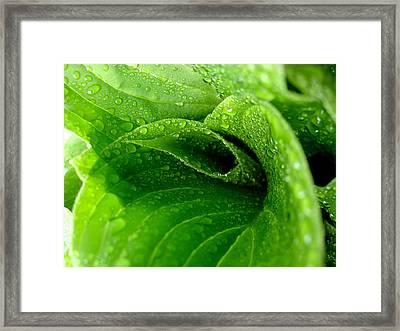 Dew Drops Framed Print by Lisa Phillips