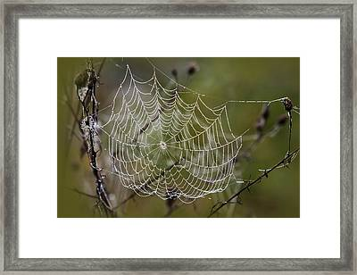 Dew Drops Spider Web Framed Print by Christina Rollo