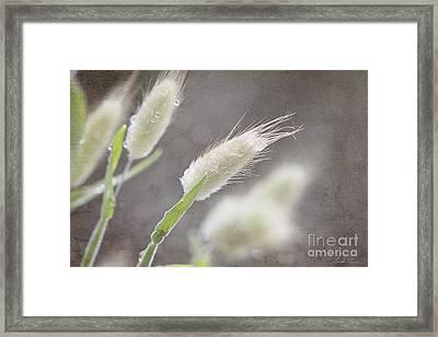 Dew Kissed Morning Framed Print by Linda Lees