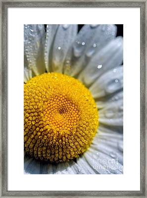 Sunshine Of Your Love - Daisy Framed Print by Henry Kowalski