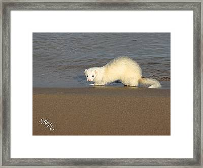 Dew On The Water Framed Print by Alicia McNally