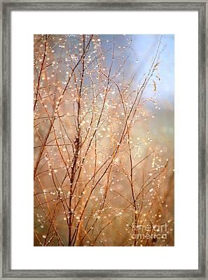 Dewdrop Morning Framed Print by Carol Groenen