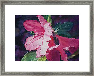 Dewy Azalea Framed Print by Christopher Reid