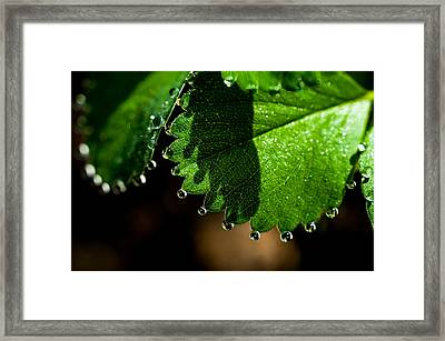 Diamond Necklace. Small Natural Wonders Framed Print by Jenny Rainbow