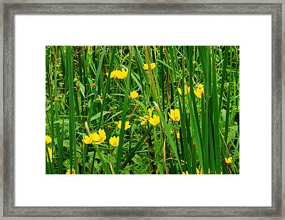 Diamonds In The Rough Framed Print by Frozen in Time Fine Art Photography