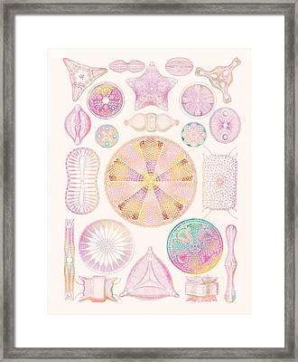 Diatoms Framed Print by Mehau Kulyk