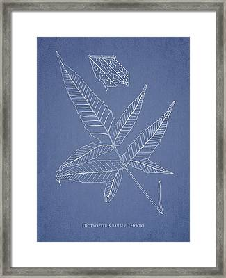 Dictyopteris Barberi Framed Print by Aged Pixel