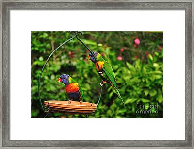 Did You See That... Framed Print by Kaye Menner