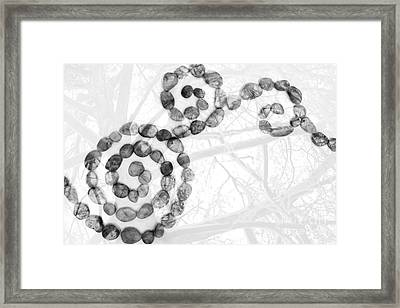 Digital Art Abstract Pebbles And Trees - Black And White Framed Print by Natalie Kinnear