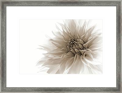 Dignified Framed Print by Priska Wettstein