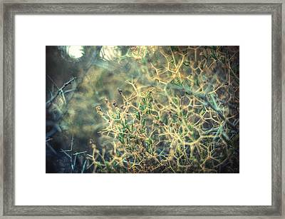Diken Framed Print by Taylan Soyturk