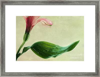dim colours II Framed Print by Priska Wettstein