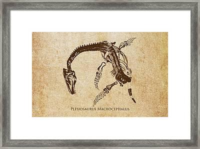 Dinosaur Plesiosaurus Macrocephalus Framed Print by Aged Pixel