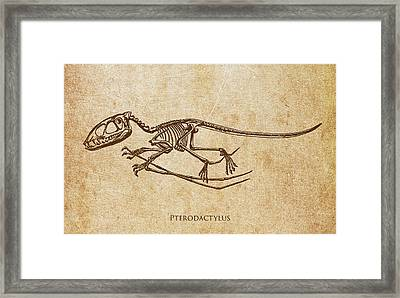 Dinosaur Pterodactylus Framed Print by Aged Pixel