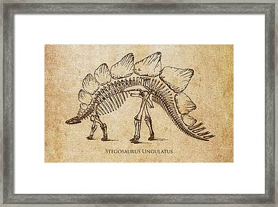 Dinosaur Stegosaurus Ungulatus Framed Print by Aged Pixel