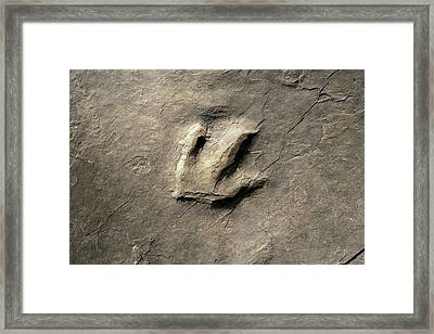 Dinosaur Track (eubrontes) Framed Print by Science Stock Photography