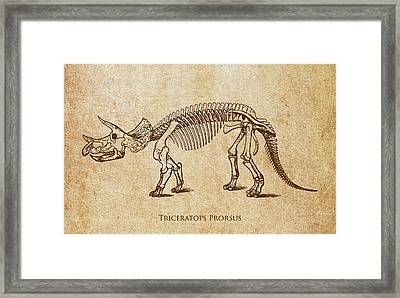 Dinosaur Triceratops Prorsus Framed Print by Aged Pixel
