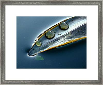 Dipping Into The Pond Framed Print by Anne Macdonald