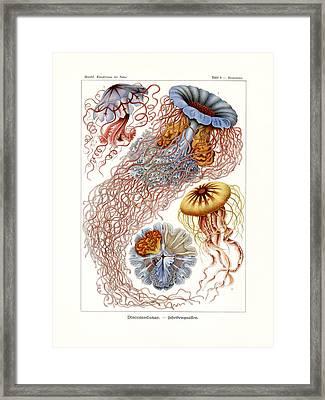Discomedusae Framed Print by Splendid Art Prints