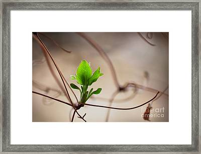 Discover Your World Framed Print by Robin Konarz
