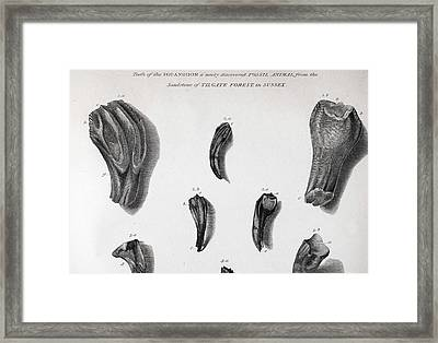 Discovery Of Iguanodon Fossil Teeth Framed Print by Paul D Stewart