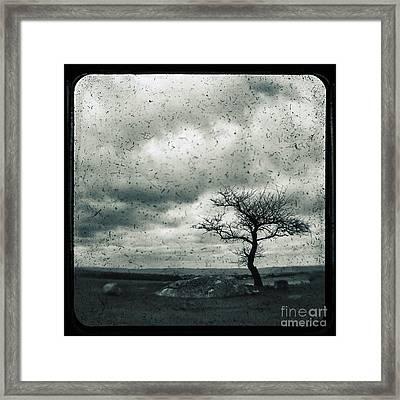 Disdain Framed Print by Andrew Paranavitana