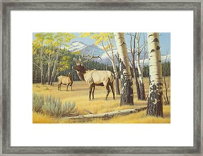 Distant Bugle Framed Print by Paul Krapf