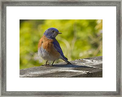 Distracted Framed Print by Jean Noren