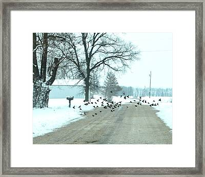 Disturbing The Flock Framed Print by Julie Dant