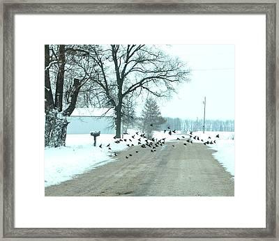 Disturbing The Flock Framed Print by Julie Dant
