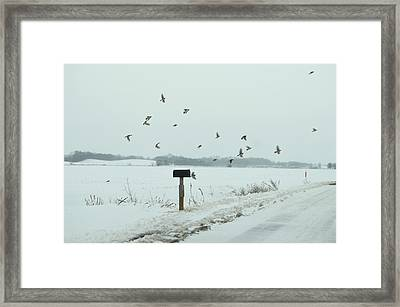 Disturbing The Winter Foragers Framed Print by Julie Dant