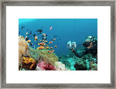 Diver Photographing Anemonefish Framed Print by Scubazoo