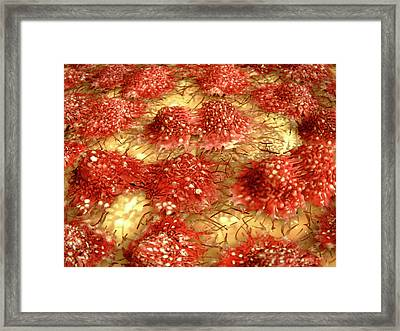 Dividing Cancer Cells Framed Print by Juan Gaertner
