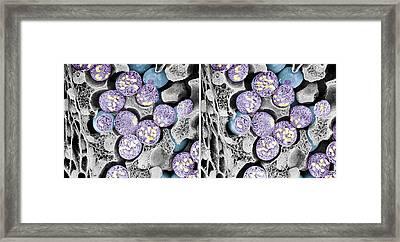 Dividing Pollen Cells Framed Print by Professor T. Naguro