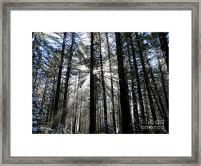 Divine Light Framed Print by Avis  Noelle