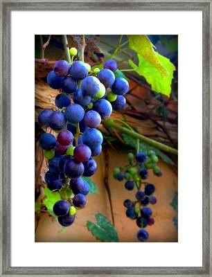 Divine Perfection Framed Print by Karen Wiles
