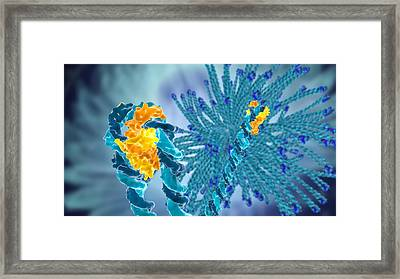 Dna-bending Protein, Molecular Model Framed Print by Science Photo Library
