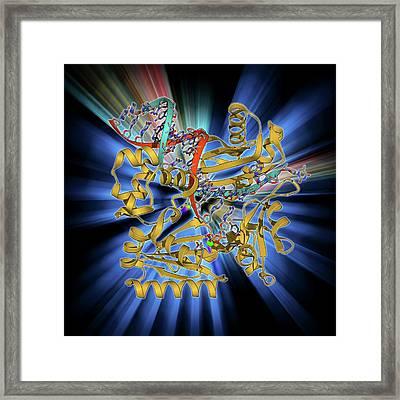 Dna Polymerase Iv With Dna Framed Print by Laguna Design
