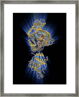 Dna Polymerase With Dna Framed Print by Laguna Design
