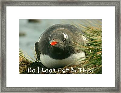 Do I Look Fat Framed Print by Amanda Stadther