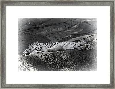 Do Not Disturb Framed Print by Joan Carroll