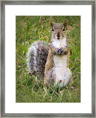 Do You Want Some? Framed Print by Zina Stromberg
