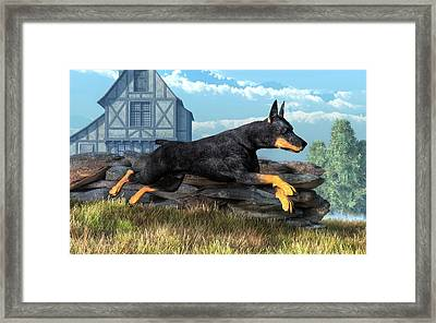Doberman Framed Print by Daniel Eskridge