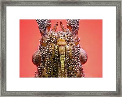 Dock Bug Head Framed Print by Nicolas Reusens