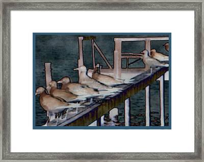Dock Flock Framed Print by Becky Sterling