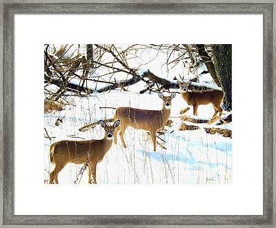 Does In The Snow Framed Print by Robyn King