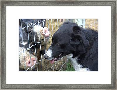 Dog And Pigs Framed Print by Kathy Bassett