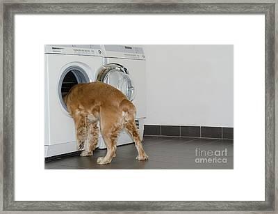 Dog And Washing Machine Framed Print by Mats Silvan