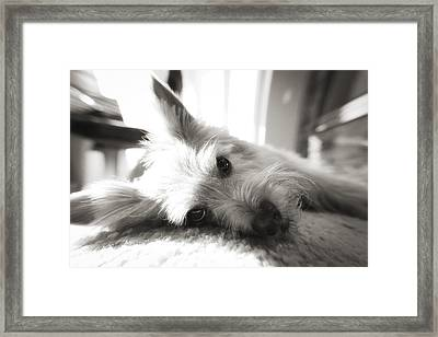 Dog Face Framed Print by Susan Stone