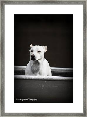 Dog In Boat Framed Print by Debra Forand
